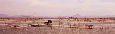 tam-giang-lagooon
